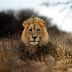 Poaching in Kenya and Tanzania