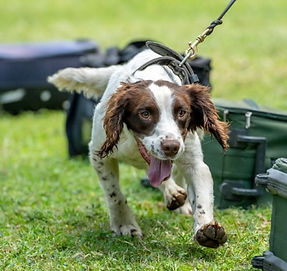 Sniffer dogs to the rescue