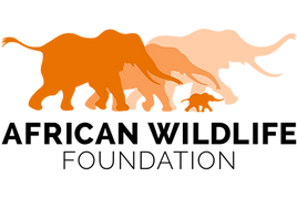 Safeguarding Africa's rhinos