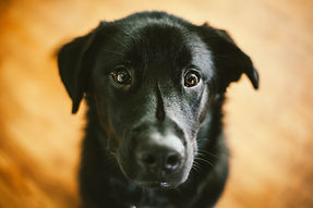 Saving dogs at risk