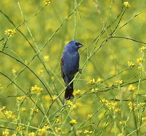 Protecting grasslands