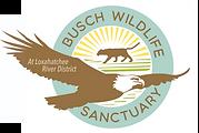 buschwildlife.org