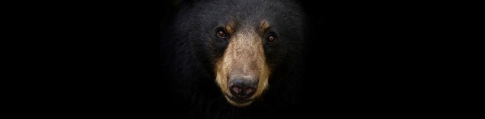 Home BEAR.jpg