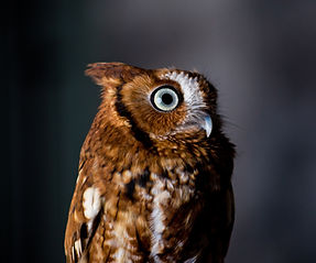 A new owl tour centre