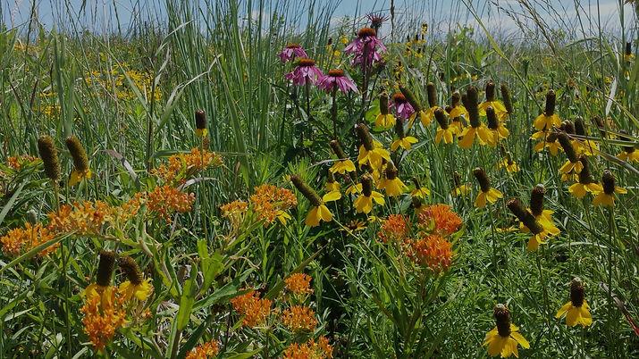 pollinator_edited.jpg
