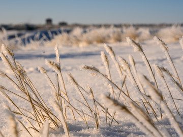 Burn Planning Help Ease Winter Woes