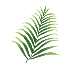—Pngtree—hand-painted tropical plant pal