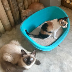 Testing the new bed