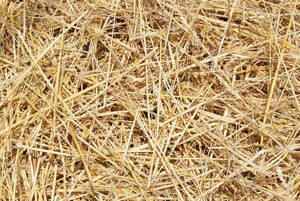 450667-straw.jpg