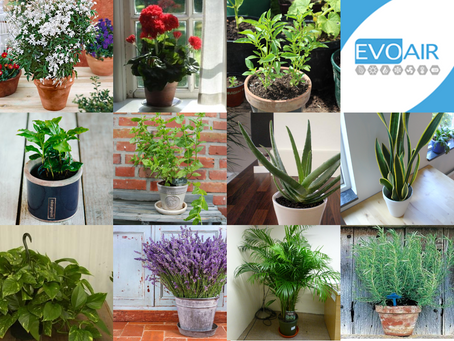 Purifier l'air intérieur de son logement à l'aide des plantes