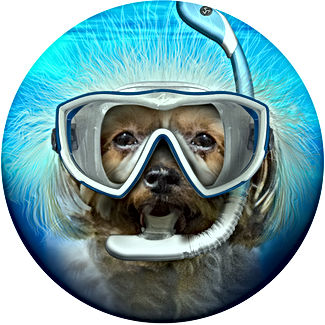Snorkling_Pup_circle_icon_v1.jpg