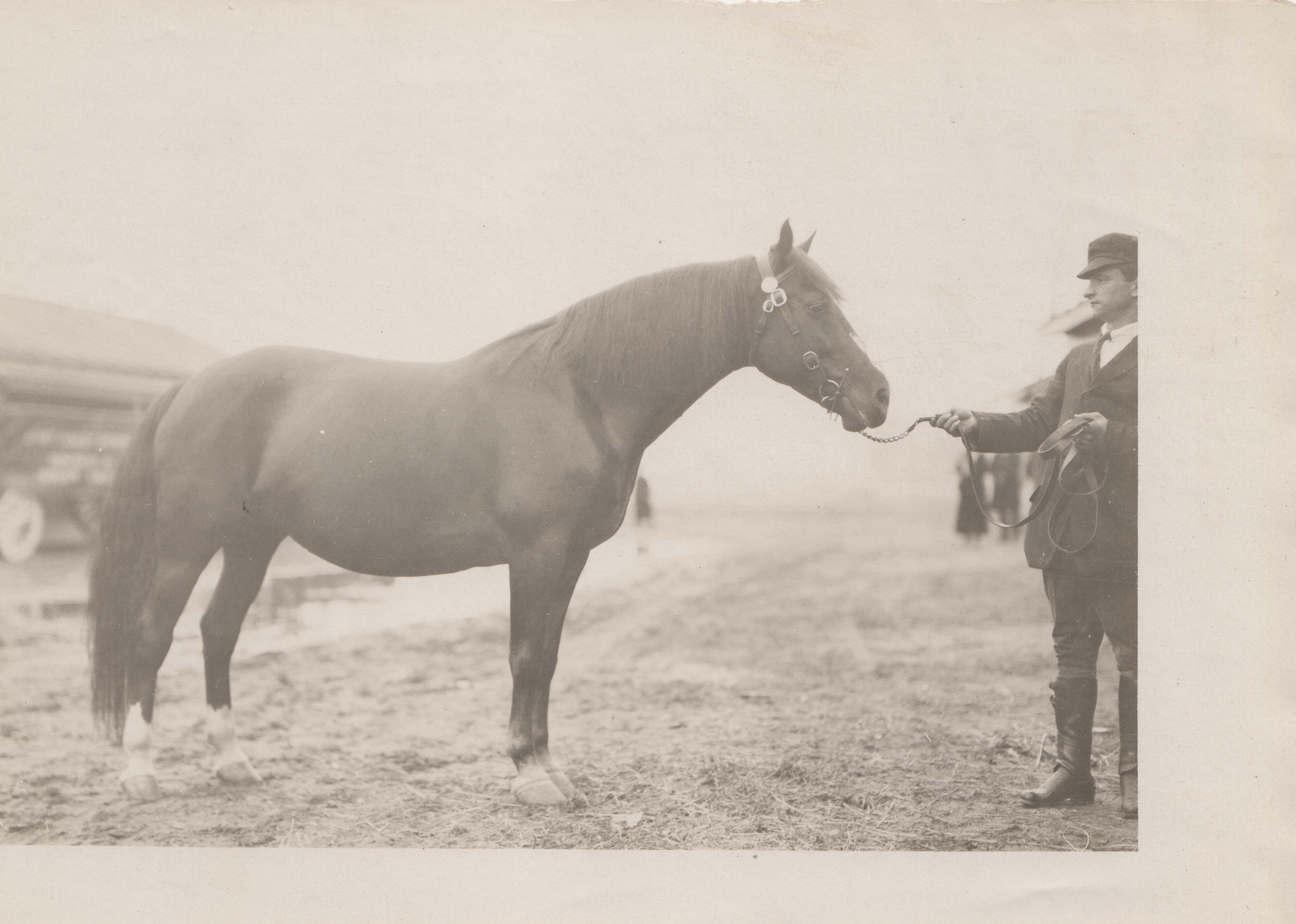 0075 A horse and a man