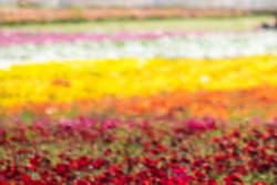 Painting_Flowers-LFT_v1