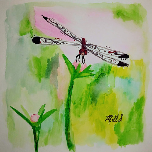 Dragonflies in Paisley Green