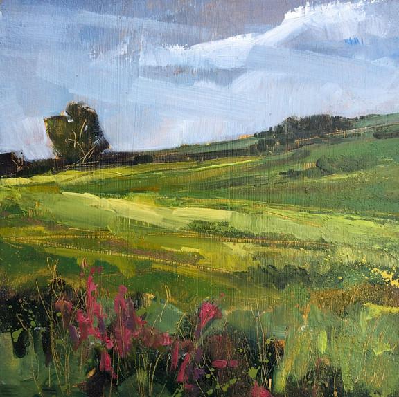 Willowherb at Ewen