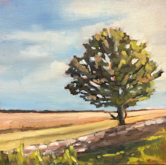 Lone Tree, Cirencester