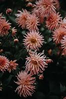 I flor