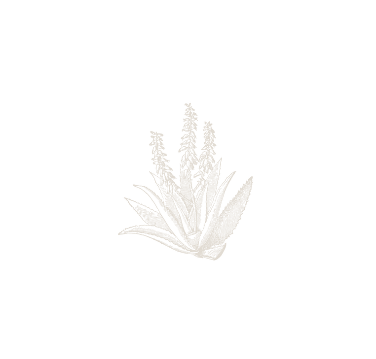 10_agave_2x.png