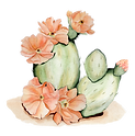 The Wayback Cactus.png