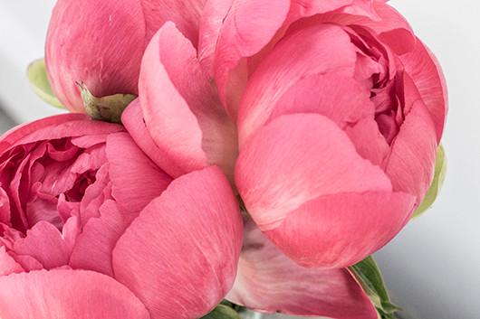 blooms_detail1_web