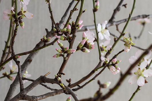 Blooms in Season | Sacramento Street