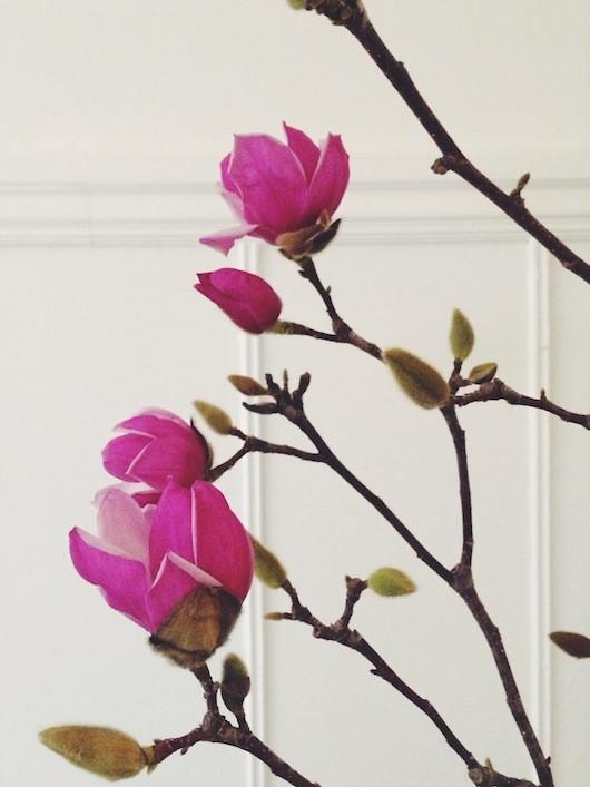 Magnolia Branches | Sacramento Street
