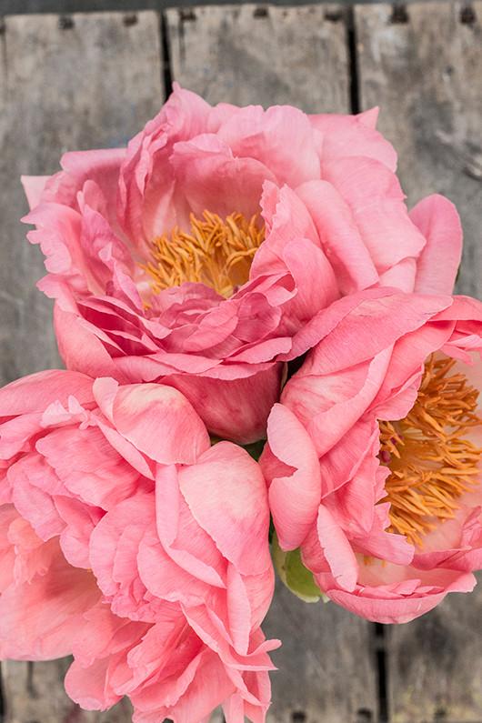 blooms_detail3_Web