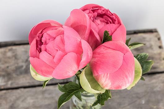 Blooms in season : May | Sacramento Street