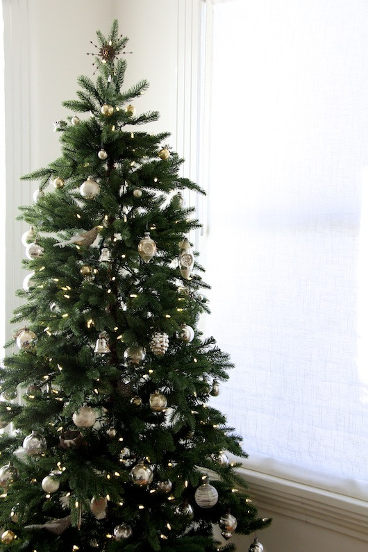 Christmas Tree | Sacramento Street