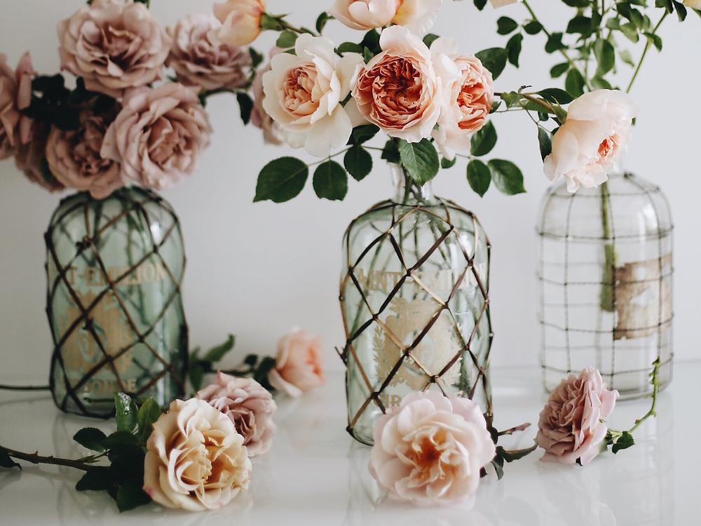 Blooms in Season: Fall Roses