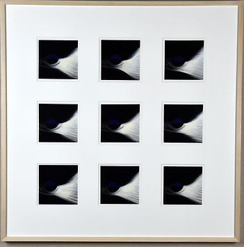 SKU # FR 5001 Black-capped Chickadees.jp