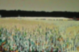 FIELD OF WHEAT, painting by Jeffrey Spedding
