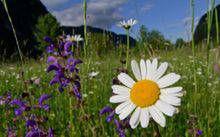 Divje cvetje v Sloveniji