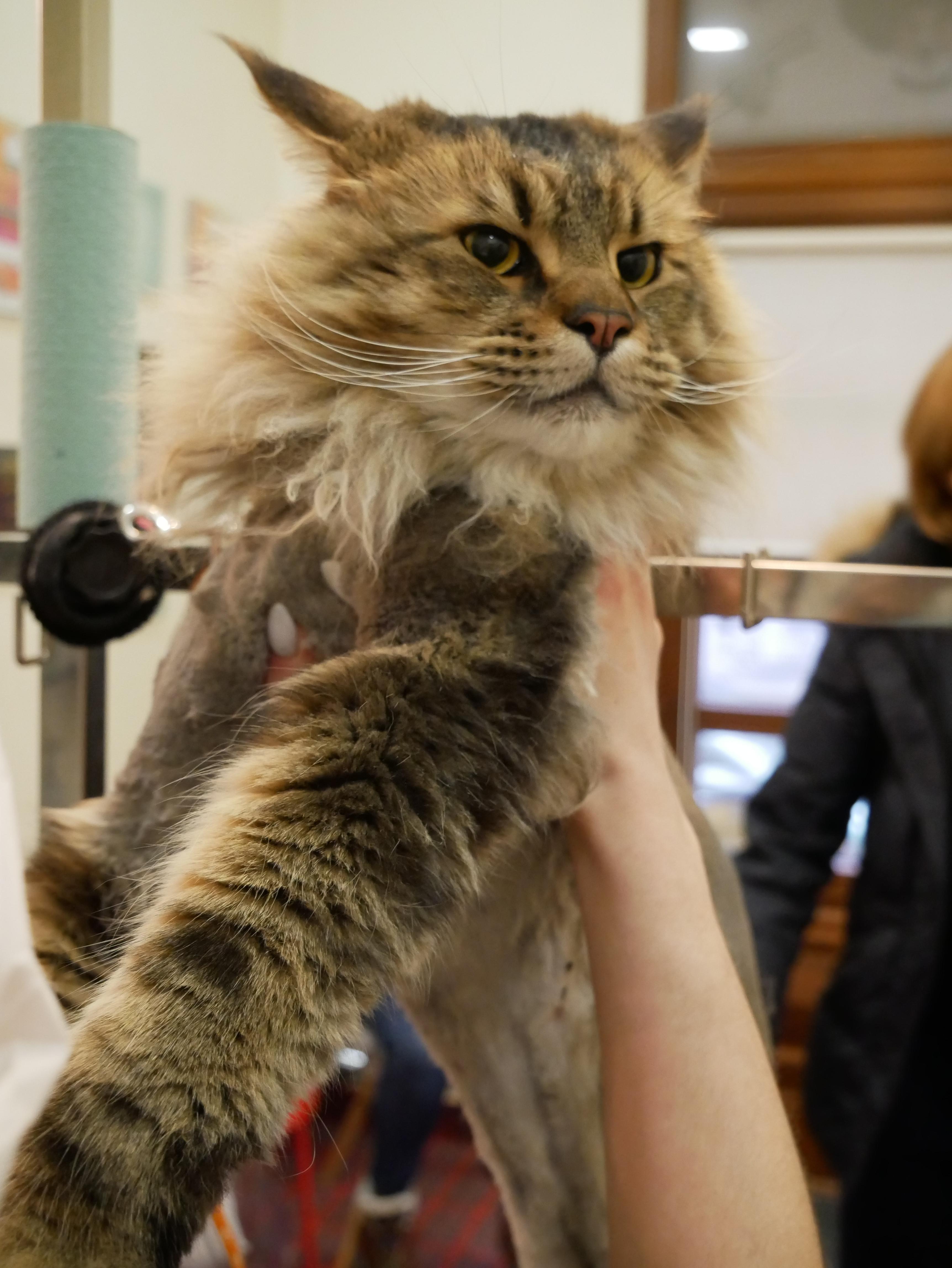 Догляд за кішками