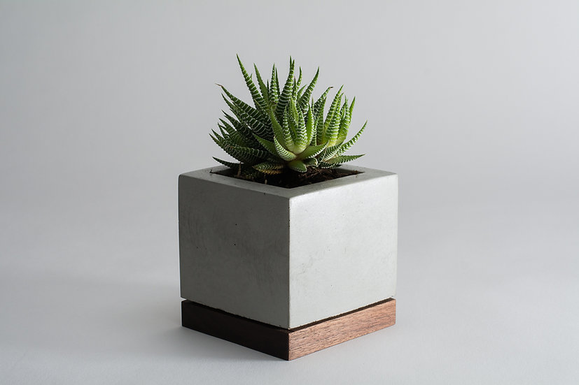 Walnut and concrete succulent planter