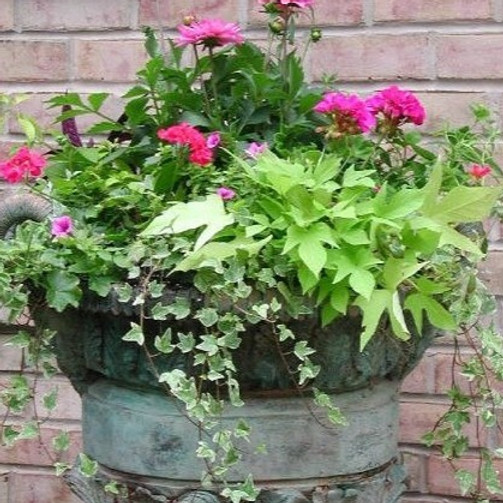 Container Planting Event - MHYC Members Only