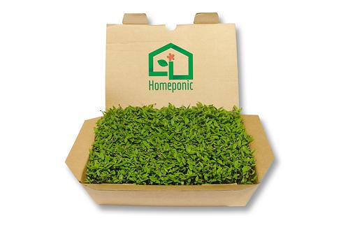 Kit cultivo microgreens - Salsa