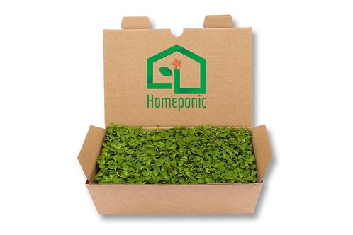 Kit cultivo microgreens - Rúcula
