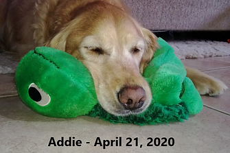 Addie with Spidey text.png