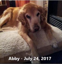 Abby DiPreta 072417 RB text.png