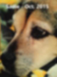 Sadie Hooker Oct 2015 RB text.png