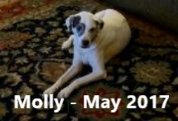 Molly Lowe May 2017 RB text.png