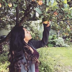 Apple picking today 😊🍎 🍎 #yummy #summ