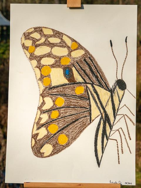 10 - Mariposa