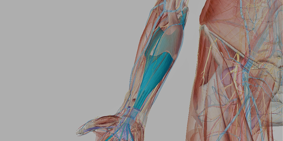 The Upper Extremites