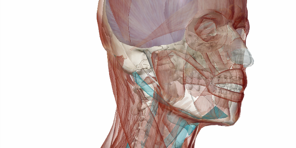 Getting Comfortable Working With the Anterior Neck
