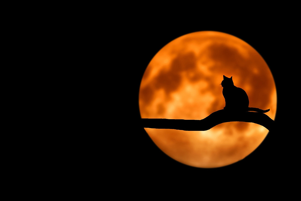 Cat sitting on a branch with the moon behind it.