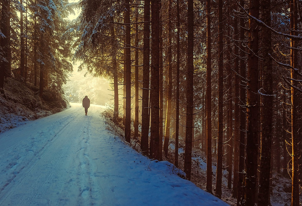 A person through a snowy forest in the winter.