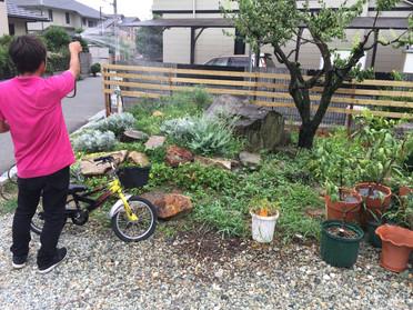 植木の水やり作業!