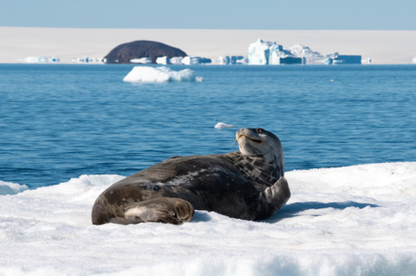 Le paradis des phoques en mer de Weddell